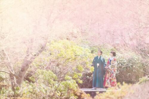桜の木に囲まれて-和装フォトウェディング